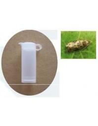 Difusor de feromona LOBELAB para polilla del racimo
