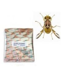 Atrayente + insecticida TRYPACK 4 mosca de la fruta