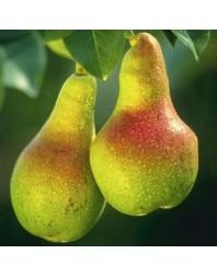 Peral variedad Limonera