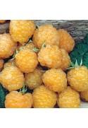Frambueso amarillo