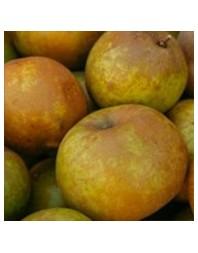 Manzano variedad Reineta