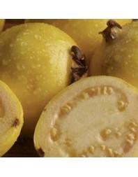 Guayaba tipo limon