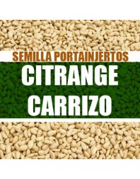 Citrange Carrizo