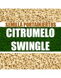 Citrumelo Swingle