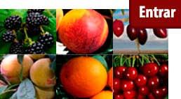 comprar frutales