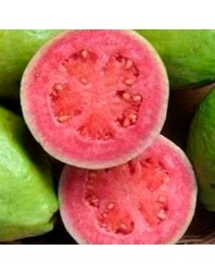 Guayaba rosa