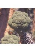 Bróculi BR-10086 F1, 10000 semillas