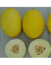 Melón amarillo Canario, 500g
