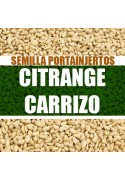 Citrange Carrizo