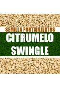 Citrumelo Swingle