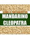 Mandarino Cleopatra